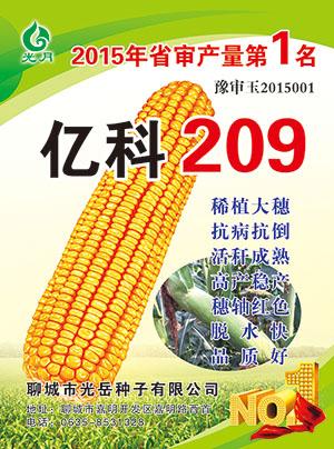 玉米种子,亿科209