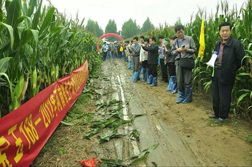 玉米种子长势情况