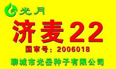 小麦种子,济麦22,国审麦2006018