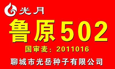 鲁原502,小麦种子,国审麦2011016